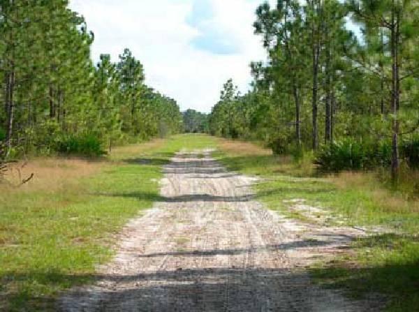 GOV: FL LAND, 1.25 AC HUNT-CAMP-FISH - STRAIGHT SALE! - 2