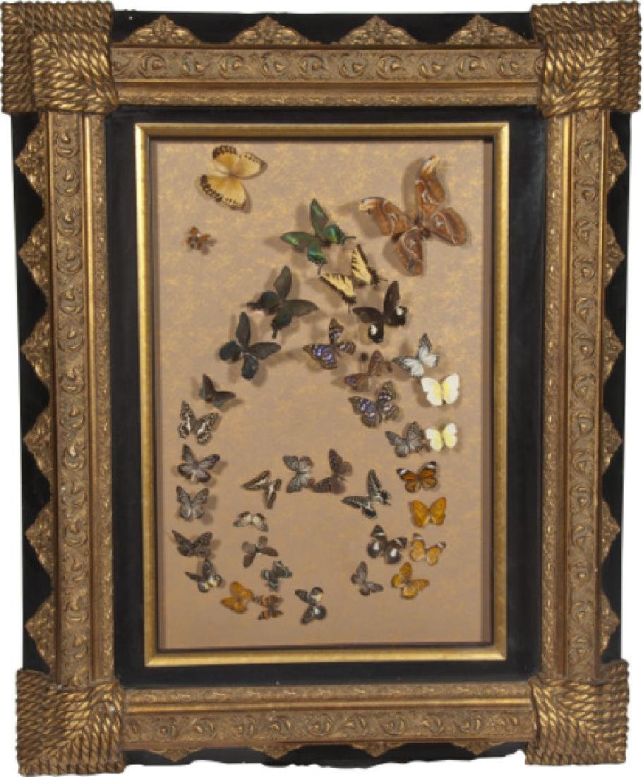 Large Glass Museum Framed Display of Rare Butterflies