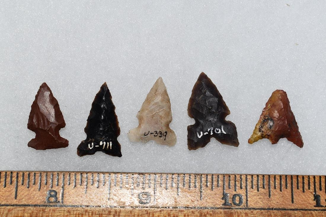 Lot of 5 Gem Grade Bird Points from Utah.