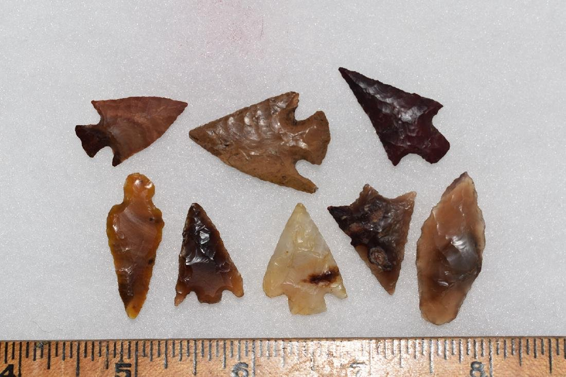 Lot of 8 Gem Grade Western Bird Points.