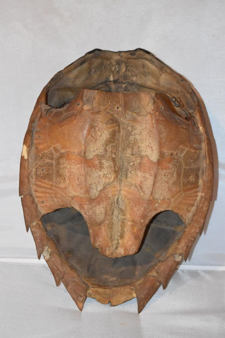 Antique Sea Turtle Shell, Illinois Resident Only - 2