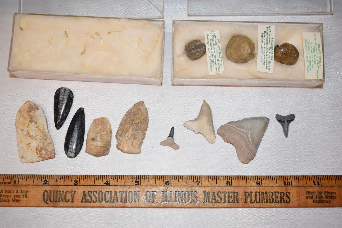 Lot of fossils and Shark Teeth,