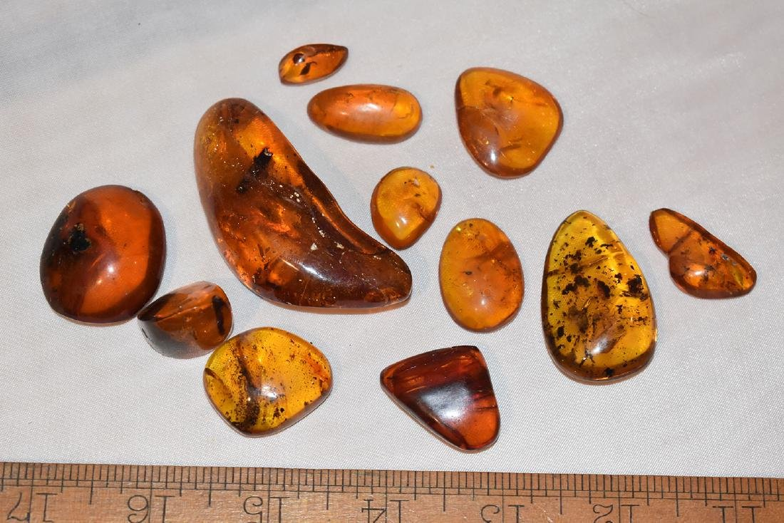 Lot of Natural Amber Nuggets with possible Insect