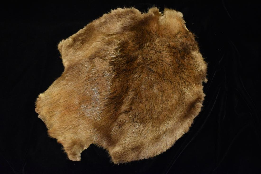 Tanned Beaver Hide Pelt, 21 inches