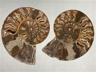 LARGE PAIR OF SPLIT AMMONITE FOSSILS, MATCHED SET, CUT