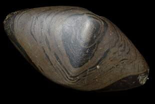 """4 5/8"""" Bannerstone Made of Banded Slate, Found in Brown"""