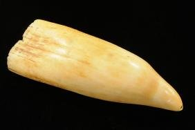 North East Coast Drilled Whale Tooth, Ex Ritter, Great