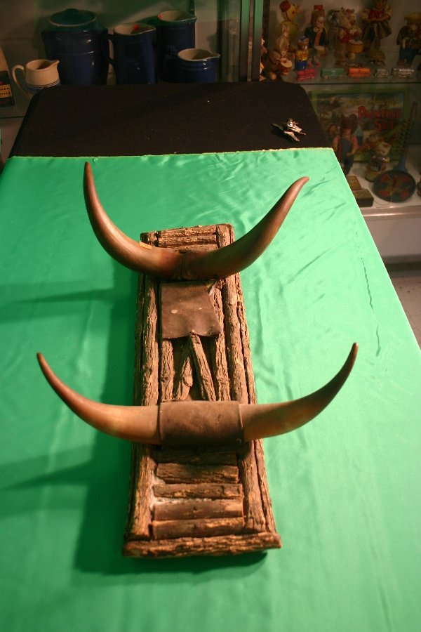 4: Steer horn wall hanging