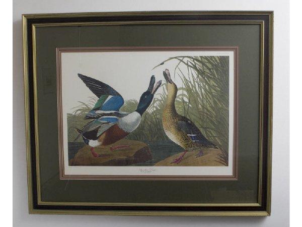 """12: J. J. Audubon, """"Stoveller Duck"""""""