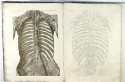 MASCAGNI VASORUM LYMPHATICORUM CORPORIS HUMANI 1787