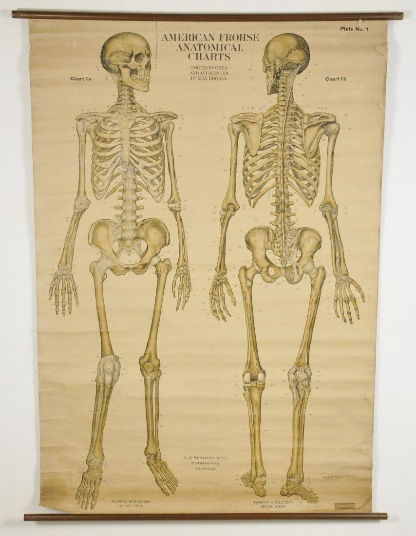 Large 1918 American Frohse Anatomical Chart of Human