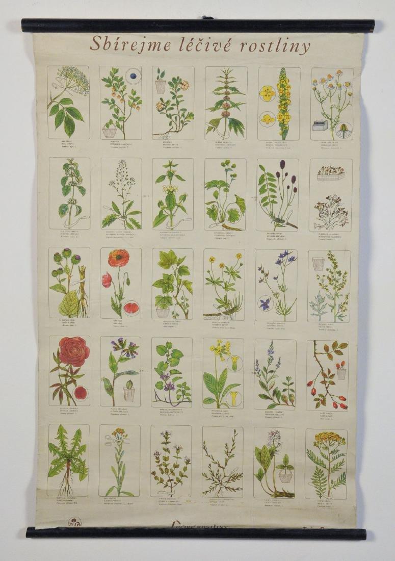 Vintage Wildflower Educational Chart in Czech