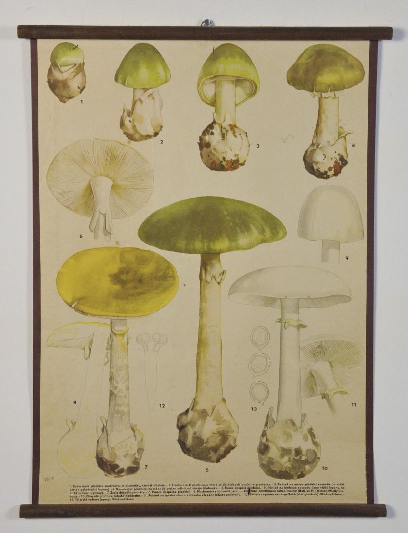 Vintage Illustrated Educational Chart on Mushrooms in