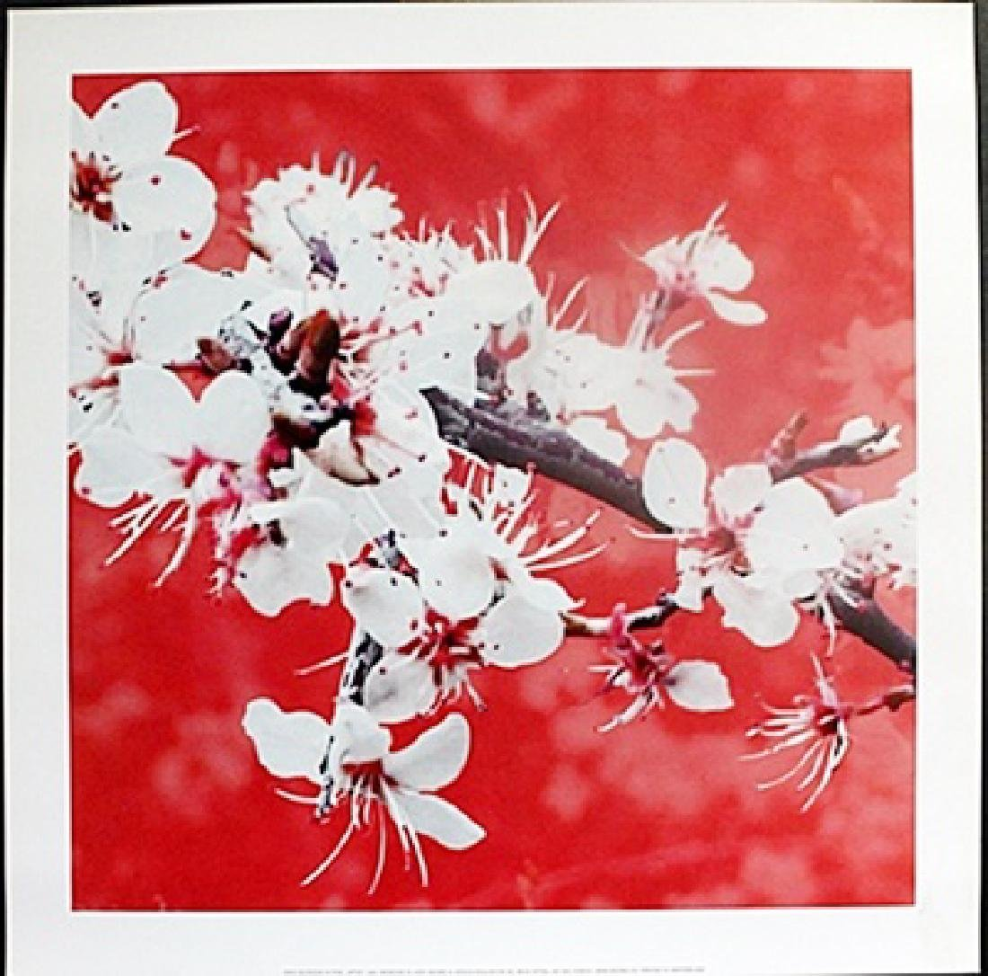"Fine Art Print ""Blossom in Pink"" by Gail Mckenzie"