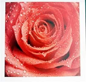 "Fine Art Print ""Red Rose"" Photograph"