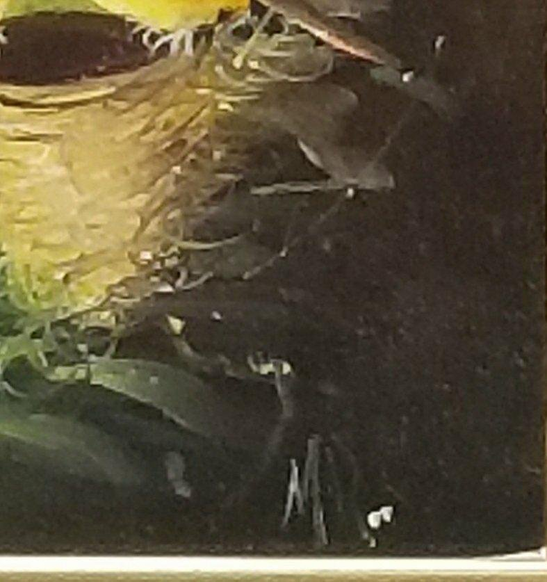 Vintage, two birds on a branch. Artist unknown, signed - 2