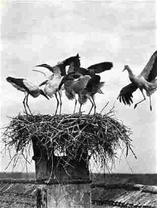 Balogh, Rudolf - Storks