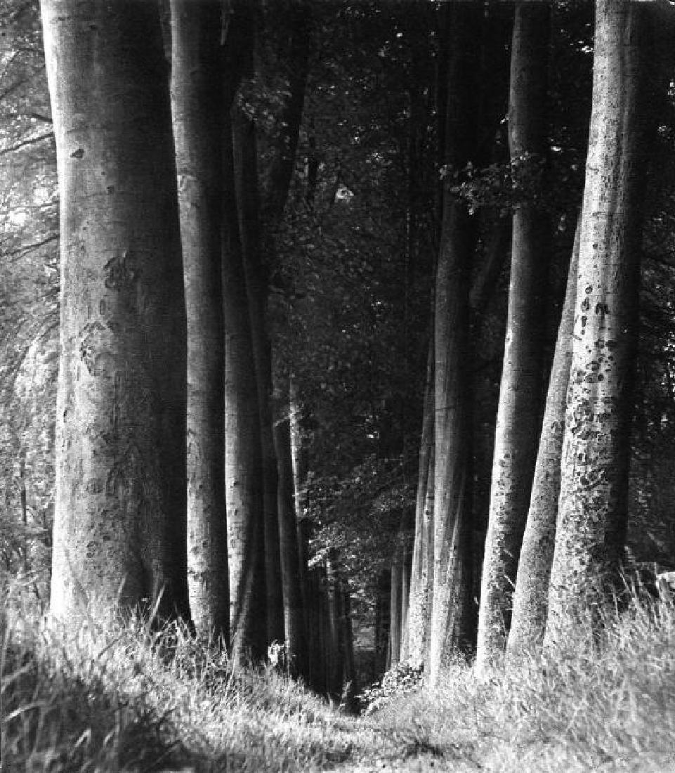 Man Ray - Trees