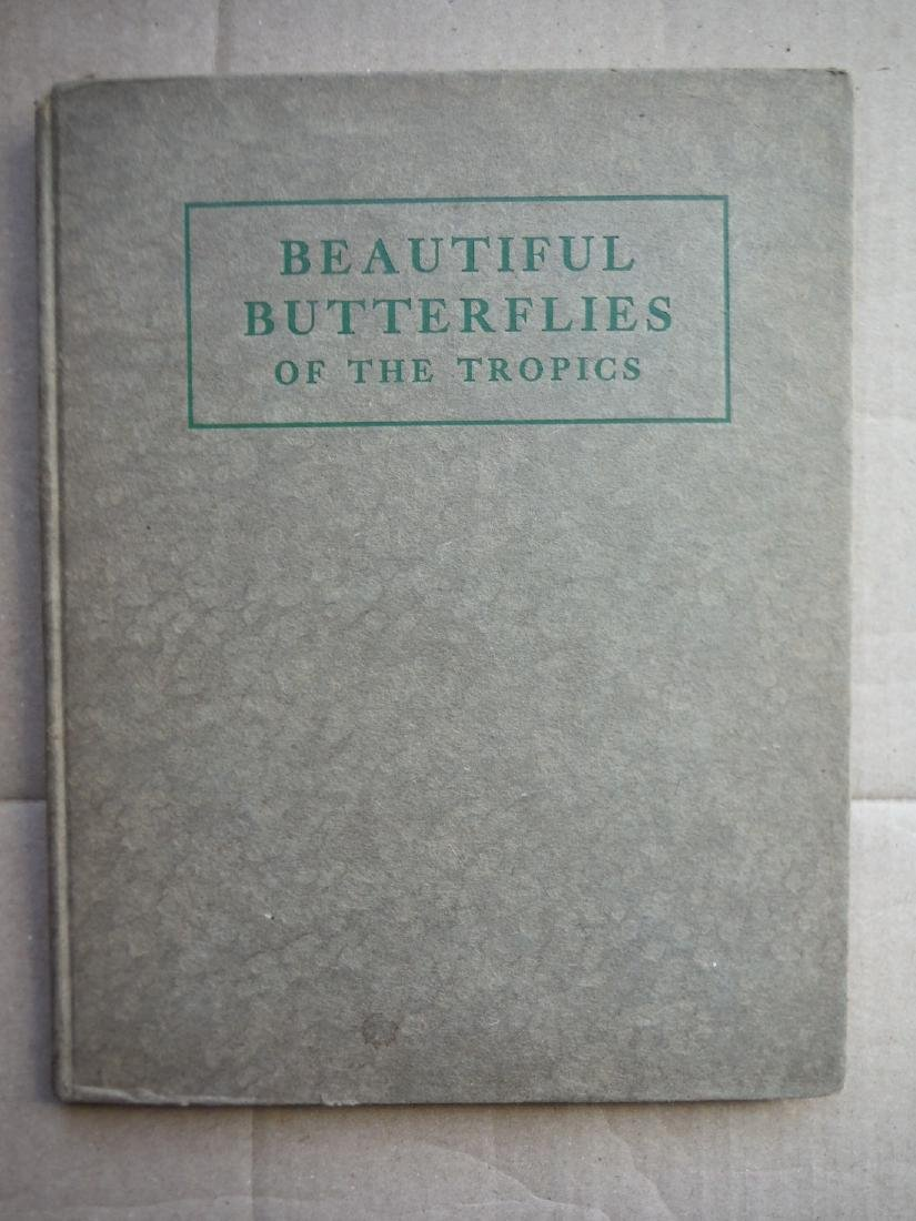 Beautiful Butterflies Of The Tropics; How To Collect