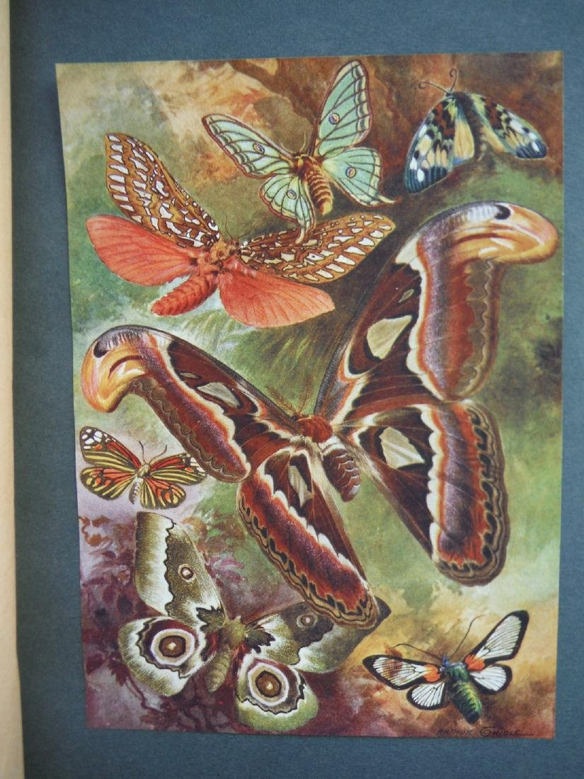 Beautiful Butterflies Of The Tropics; How To Collect - 3