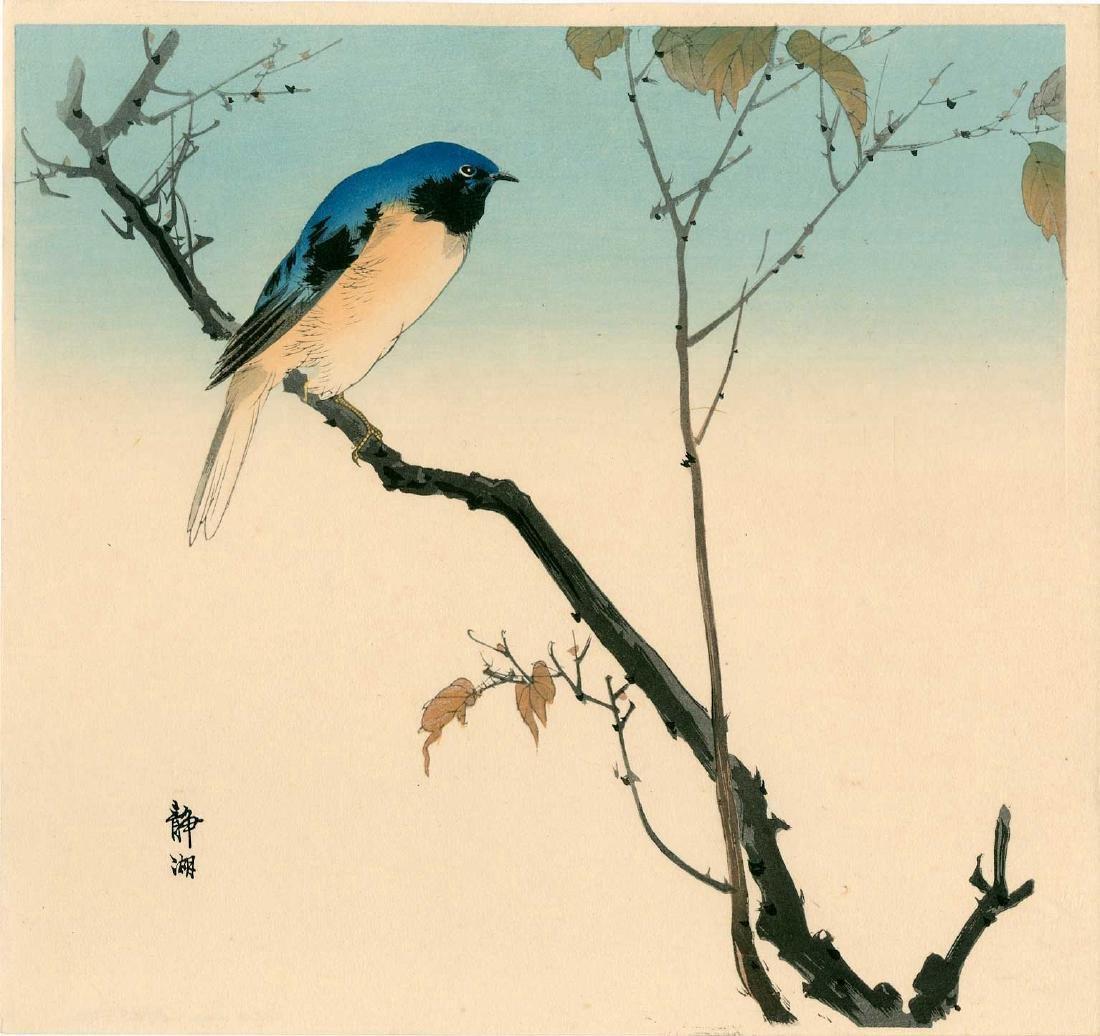 Seiko Okuhara: Blue Bird Perched on a Branch
