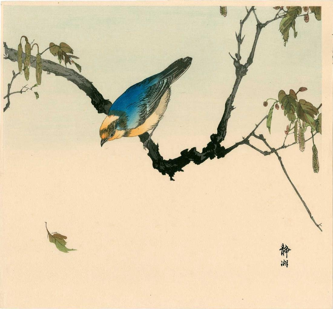 Seiko Okuhara: Blue Titmouse Ready for Flight