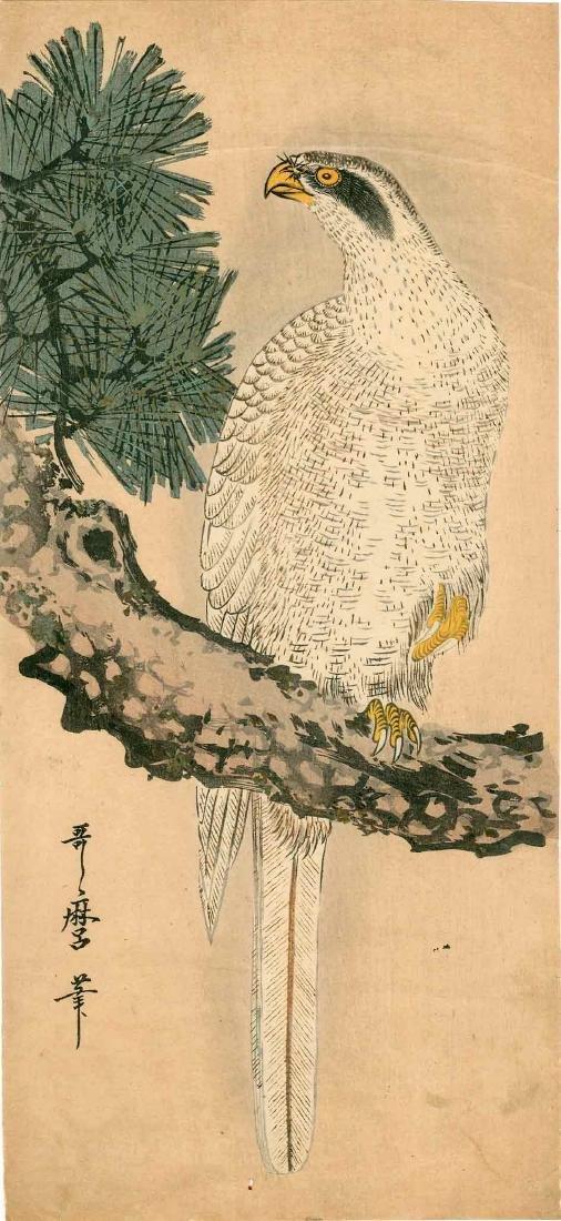 Utamaro: White Eagle on a Pine Branch