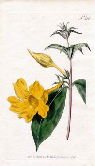 Lot of 4 Curtis Antique Botanical Prints