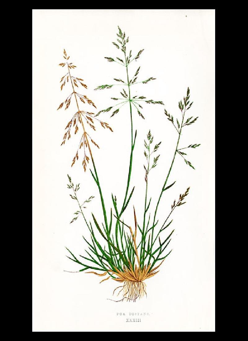 Lot of 44 Lowe antique grass prints - 10