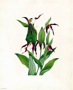 Lot of 4 Mary Vaux Walcott botanical prints