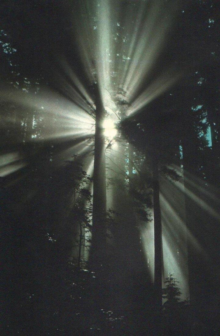 DENNIS STOCK - Redwood National Park