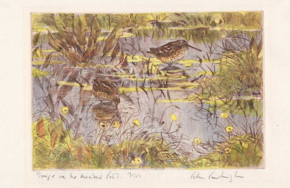 Snipe in the Meadow Pool