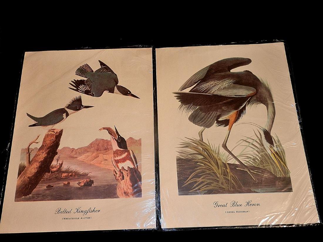 Vintage Aquatic Bird Prints