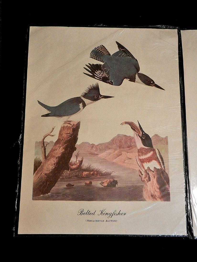 Vintage Aquatic Bird Prints - 2