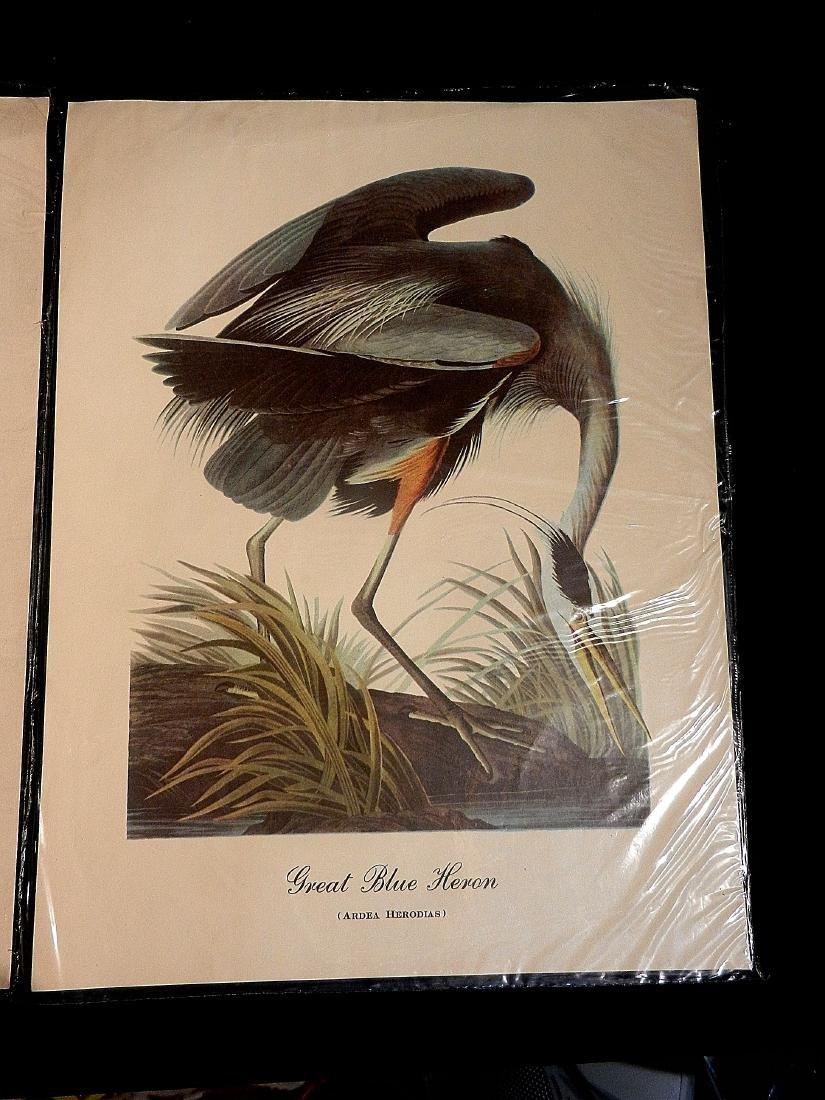 Vintage Aquatic Bird Prints - 3