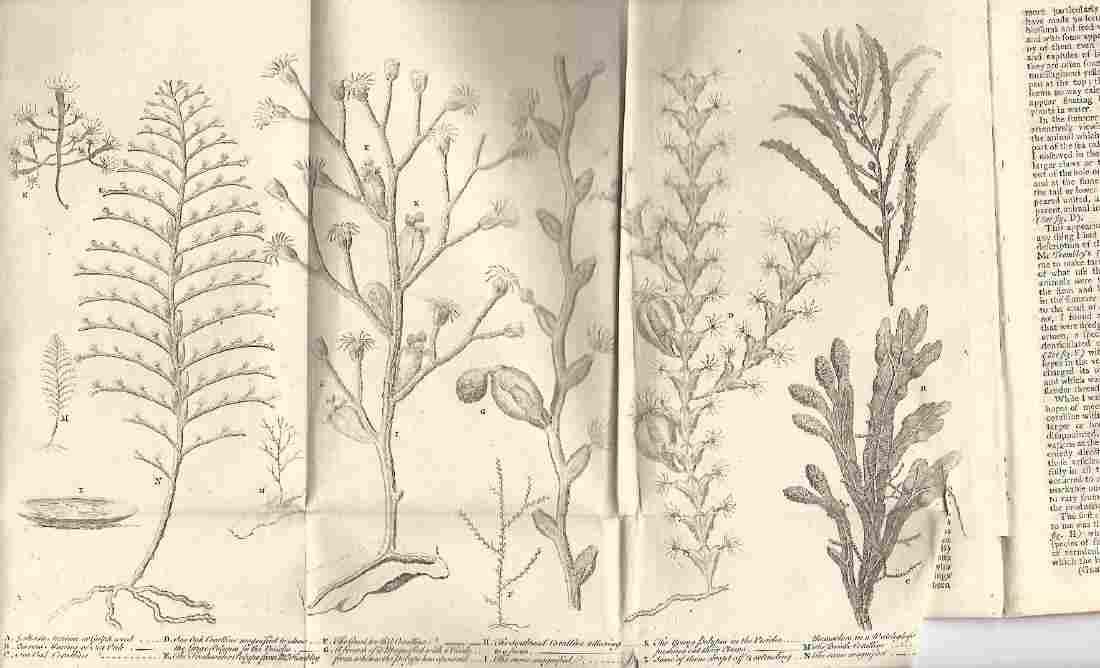 1756 Gentleman's Magazine, Engraving of Coral