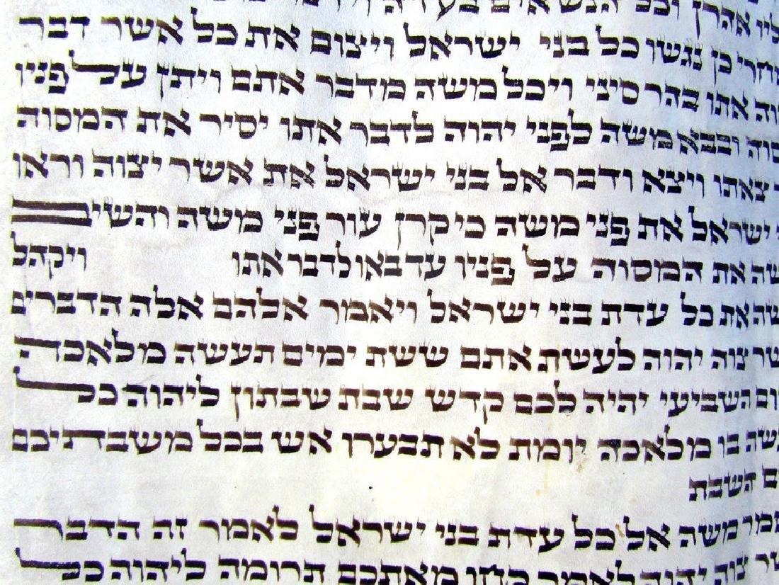 Torah Fragment Manuscript on Parchment - 2