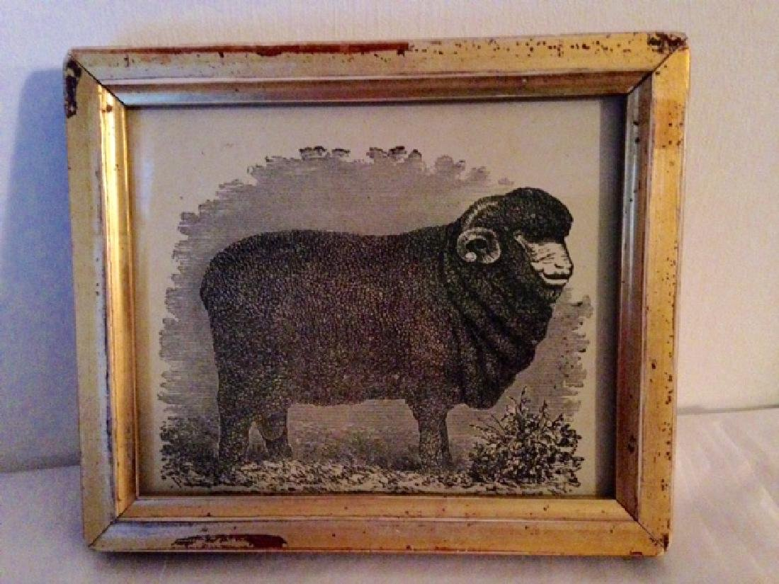 Framed Sheep Engraving
