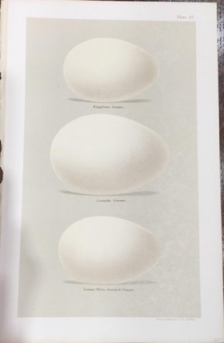 Coloured Figures of the Eggs of British Birds