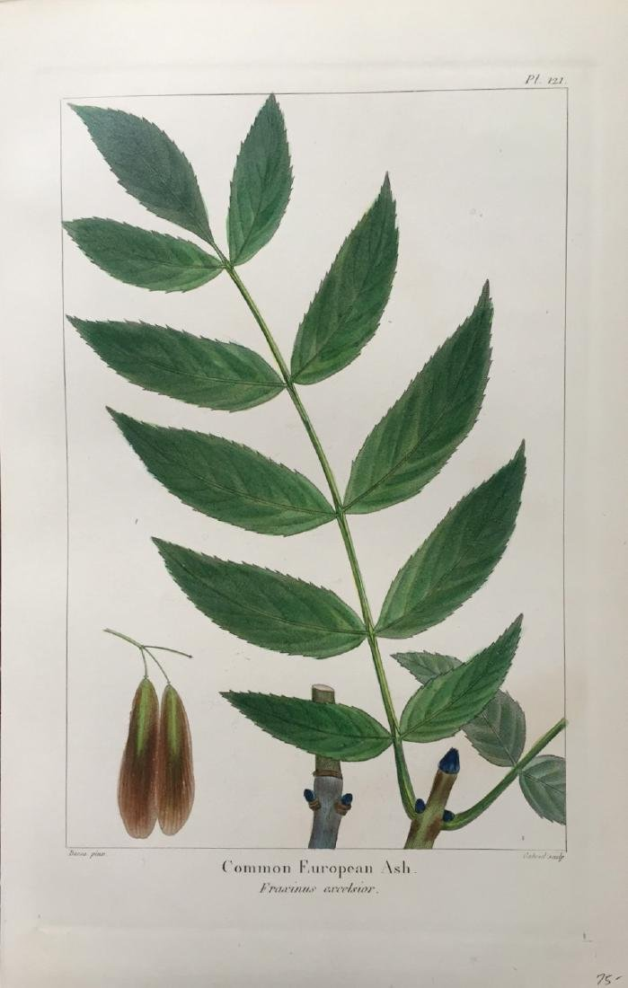 The North American Sylva, Forest Trees by F. A. Michaux