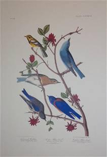 Audubon: Townsand's Warbler Artic & Western Blue Bird