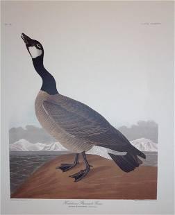 Audubon: Hutchins's Barnacle Goose Pl. CCLXXVII