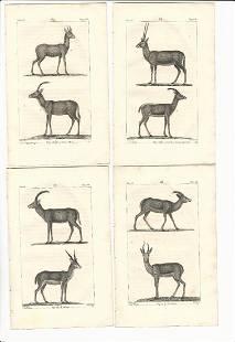 1821 Buffon Four Engravings of Gazelles