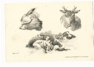 1801 Fine Etching Samuel Howitt Animals
