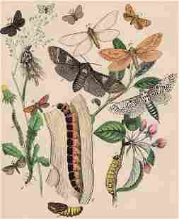 Moths, 1882, Hand-Colored 1st Edition Print