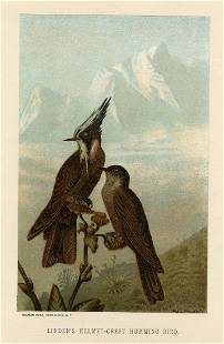 Linden's Helmen-Crest HummingbirdRev. J. G. Wood