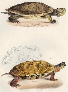 James DeKay,Tortoise and Terrapin, 1842