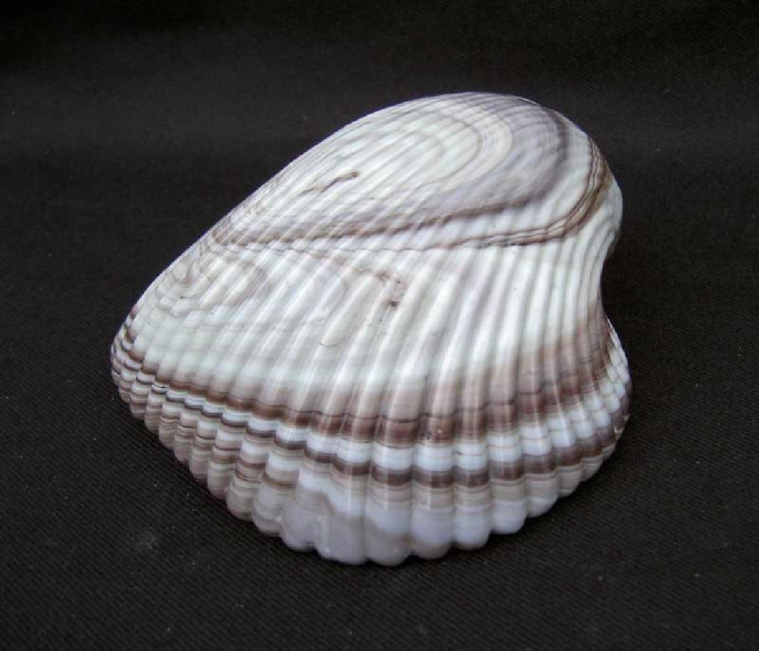 English Slag Glass Shell, Victorian