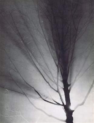BRASSAI - Tree at Night