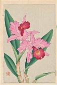 Shodo Kawarazaki: Orchid